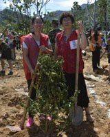 tree planting 2013